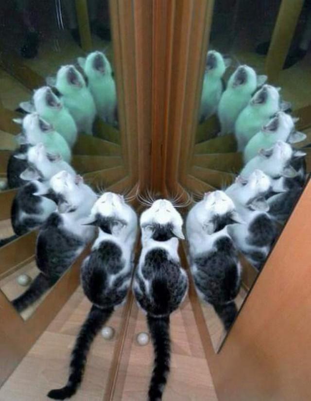 Кот явно вызывает демона