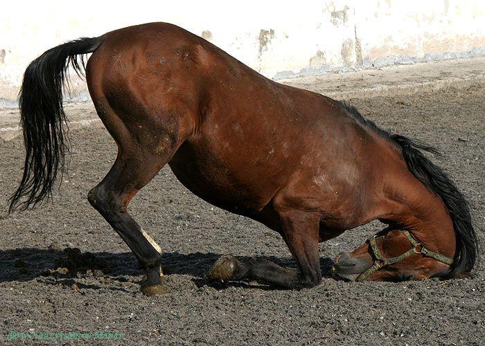 """Откуда пошло выражение """"ещё конь не валялся""""?"""