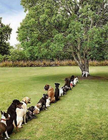 В очередь! Дерево-то одно!